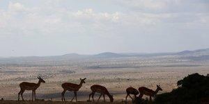 Alerte mondiale sur la biodiversite