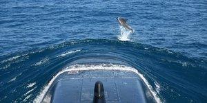 L& 39 australie va acquerir des sous-marins nucleaires americains