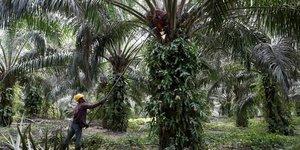 La technologie des satellites pour une huile de palme responsable