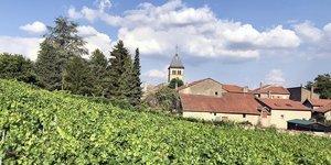 Vignoble Moselle